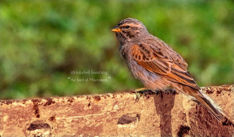 hotel offer early bird Dar Housnia in Marrakech