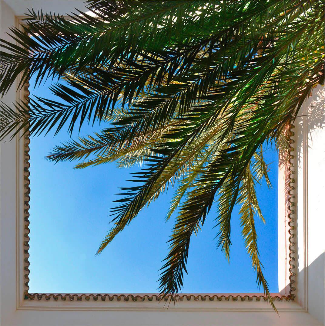 palmier ciel bleu riad Dar Housnia